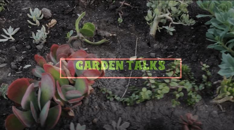 Dae Gardens Talks with Jorge Heredia