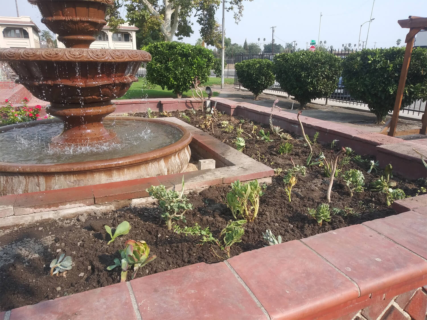Succulents Planted Around Fountain